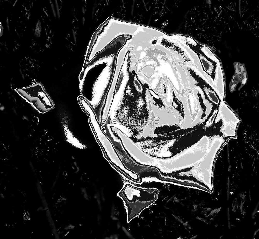 Black Rose by shevahart69