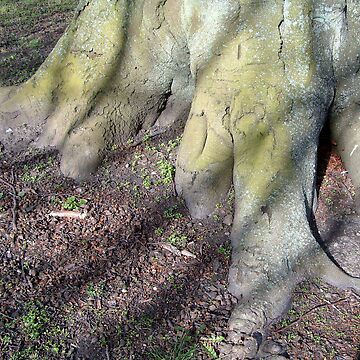 Hands in soil by hilarydougill