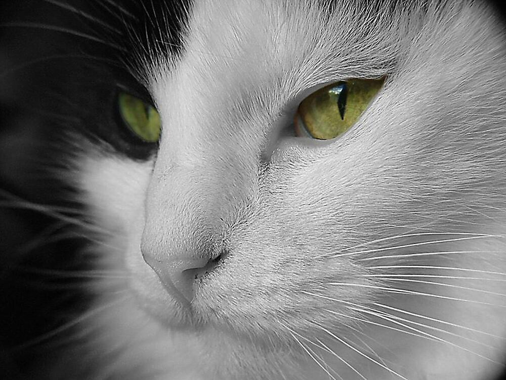Up Close by Ann-Marie Metcalfe