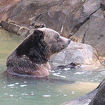 Bear Spa by GQ1NYC