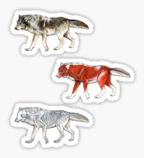 Wolf Anatomy Sticker