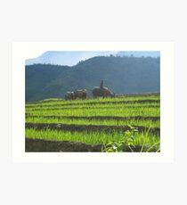 Sapa Vietnam Art Print