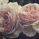 A Shropshire Lad - English Rose - Vintage Style by Martina Cross