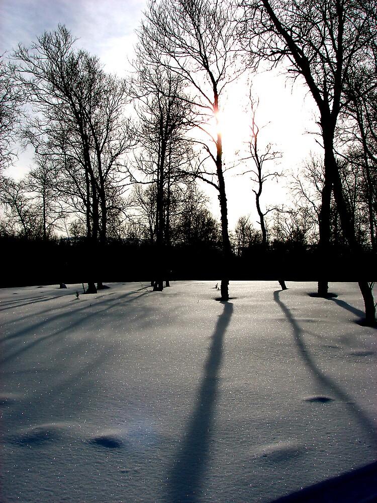 Shadows by evamarina