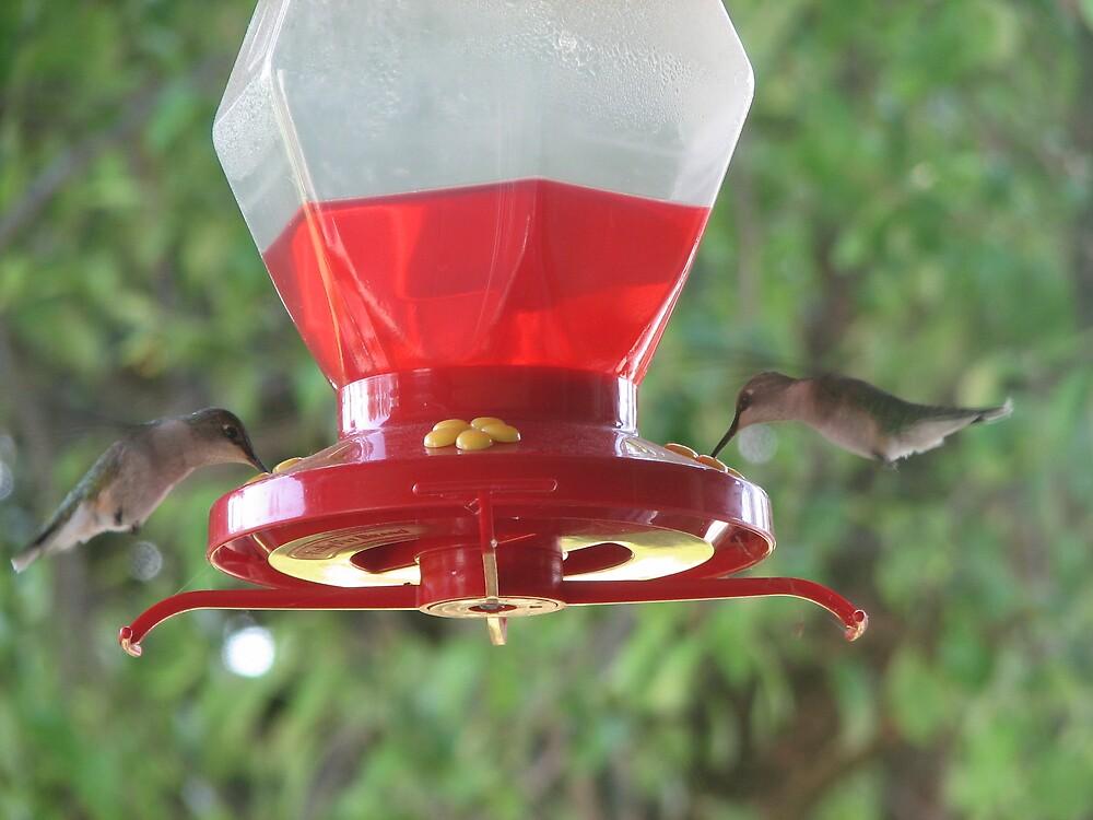 My Hummingbirds. Michigan by spiritsfreedom