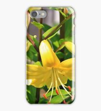 Lilys iPhone Case/Skin