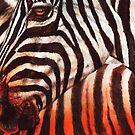 Zebra Sunset by Peter Williams