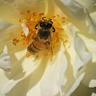 Busy Bee by D-GaP