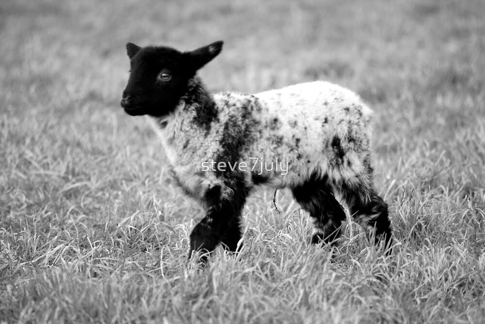 Little Lamb by steve7july