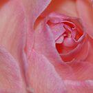 Rose by VenusOak
