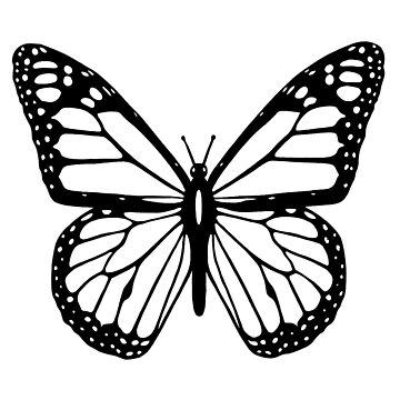 Butterfly, Black and White Butterfly by TOMSREDBUBBLE