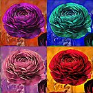 Warholia Ranunculus  by theminx1