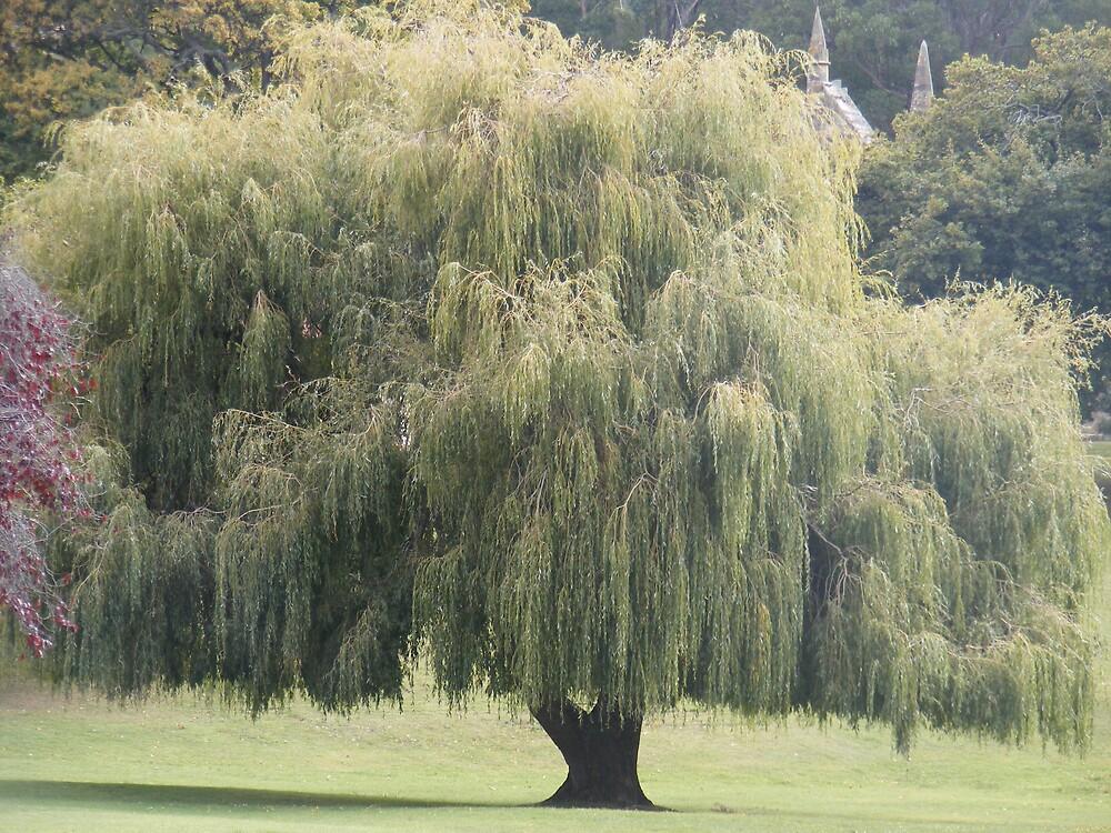 A tree by jbrinx27