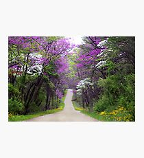 Redbuds in Bloom Photographic Print