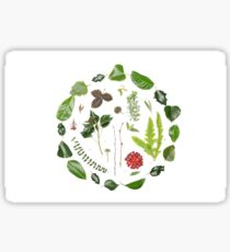 Plants Leaves Berries  Sticker