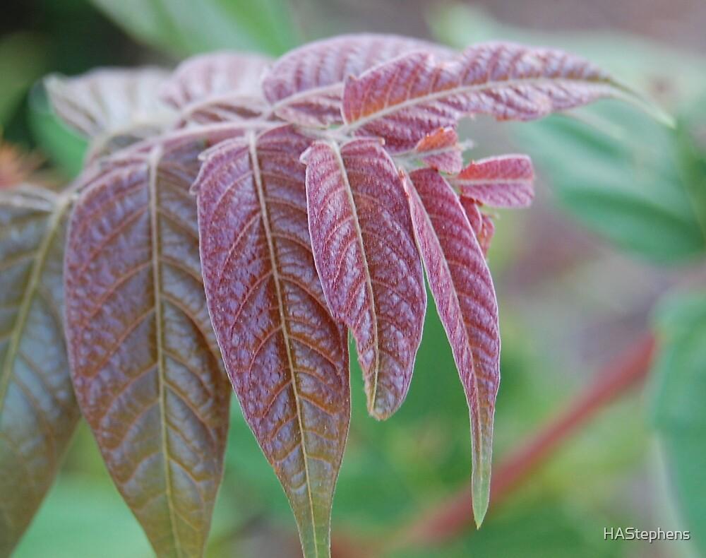Red leaves by HAStephens