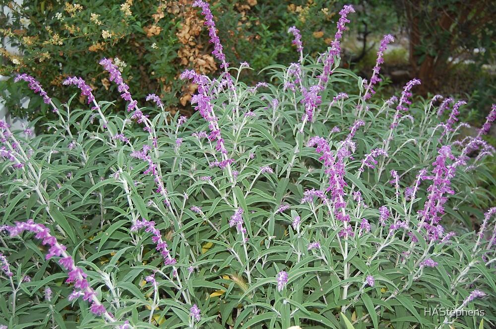 Purple stalks by HAStephens