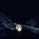 dragonfly in flight by Bernhard Adams
