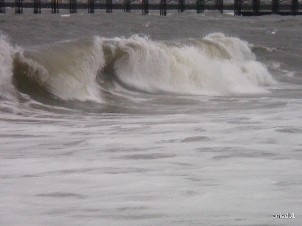 seal beach by aniedb1