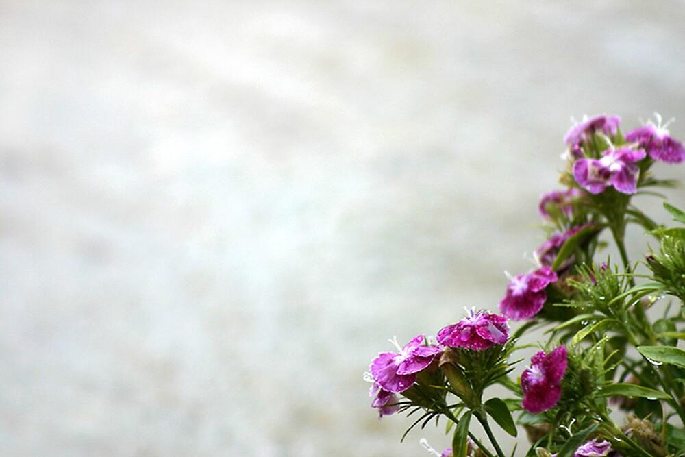 Purple Flower by steedent