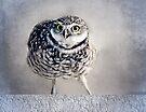 Burrowing Owl by LudaNayvelt