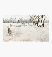Snowy Deer Scene Photographic Print