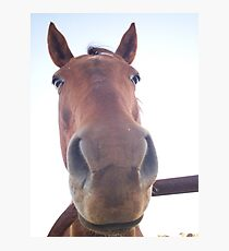 Why The Long Face? Fotodruck