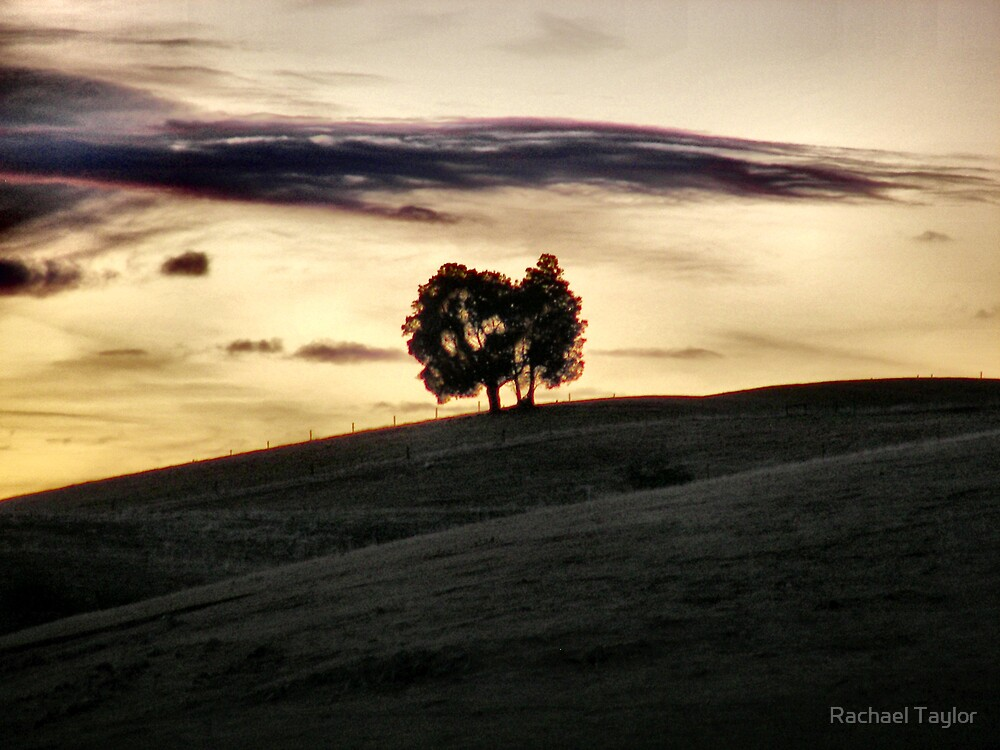 Tree on a Hill by Rachael Taylor