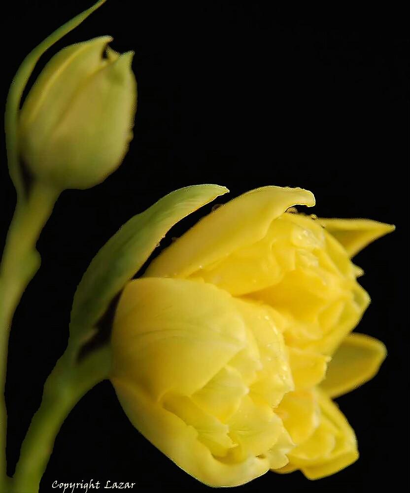 Yellow Flower by terrylazar
