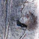 Profile in Wood by Shelley Heath