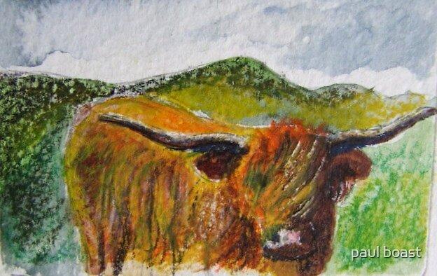 Highland Cow by paul boast