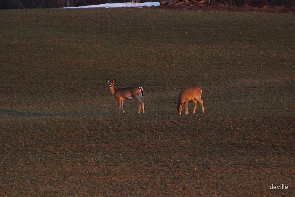 Deer Hunter  series by deville