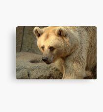 Syrian Brown Bear  V Canvas Print