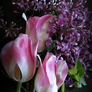 Lilacs And Tulips by kkphoto1