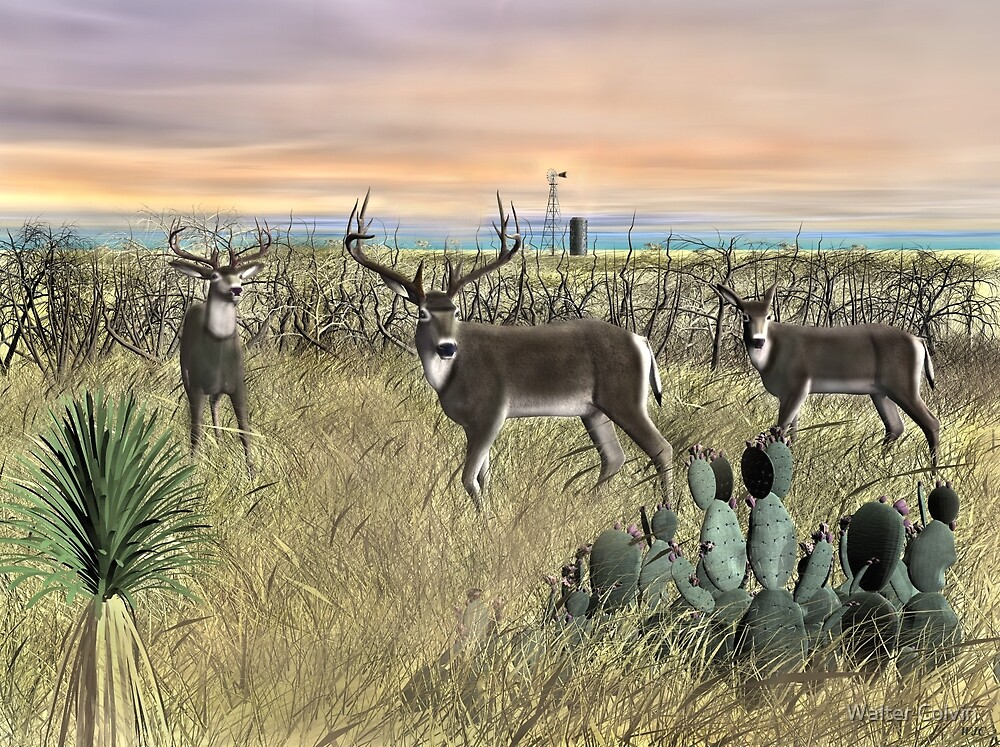 Field Deer by Walter Colvin