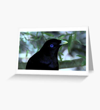 Male Satin Bower Bird III Greeting Card