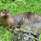 North American River Otters by lezvee