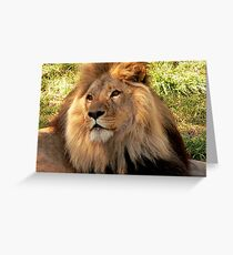 Lion II  Greeting Card