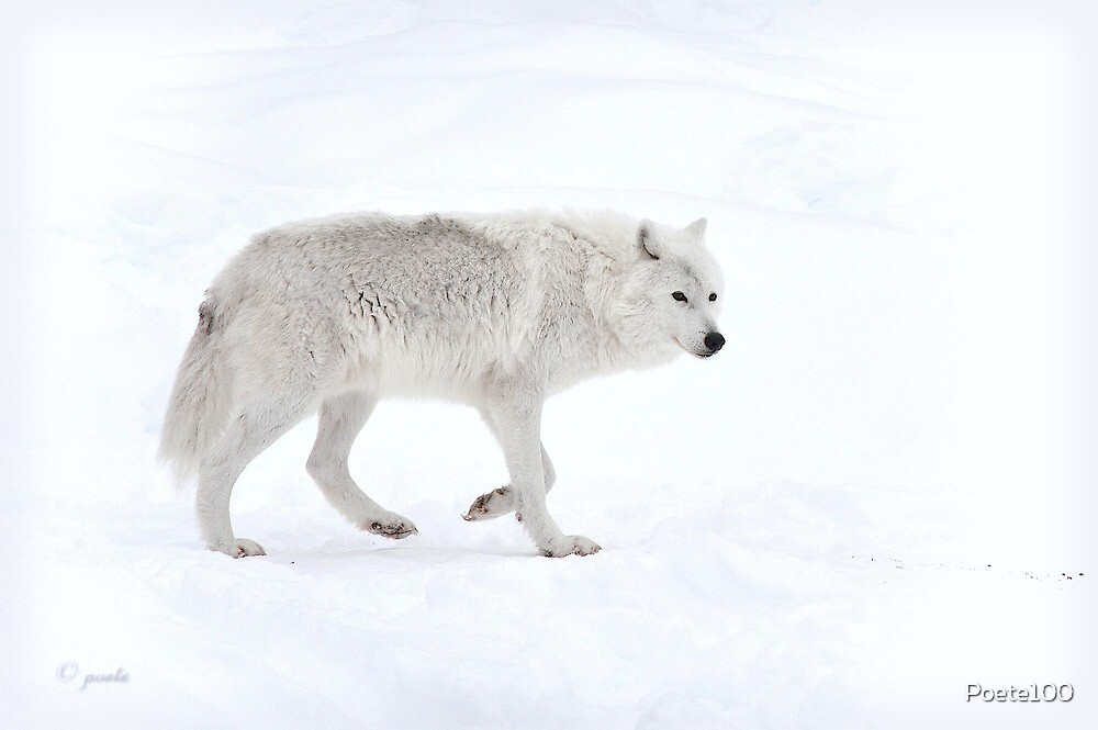 White Wolf : Nothing else matters by Poete100