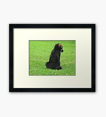 GERMAN SHEPERD PUPPY Framed Print
