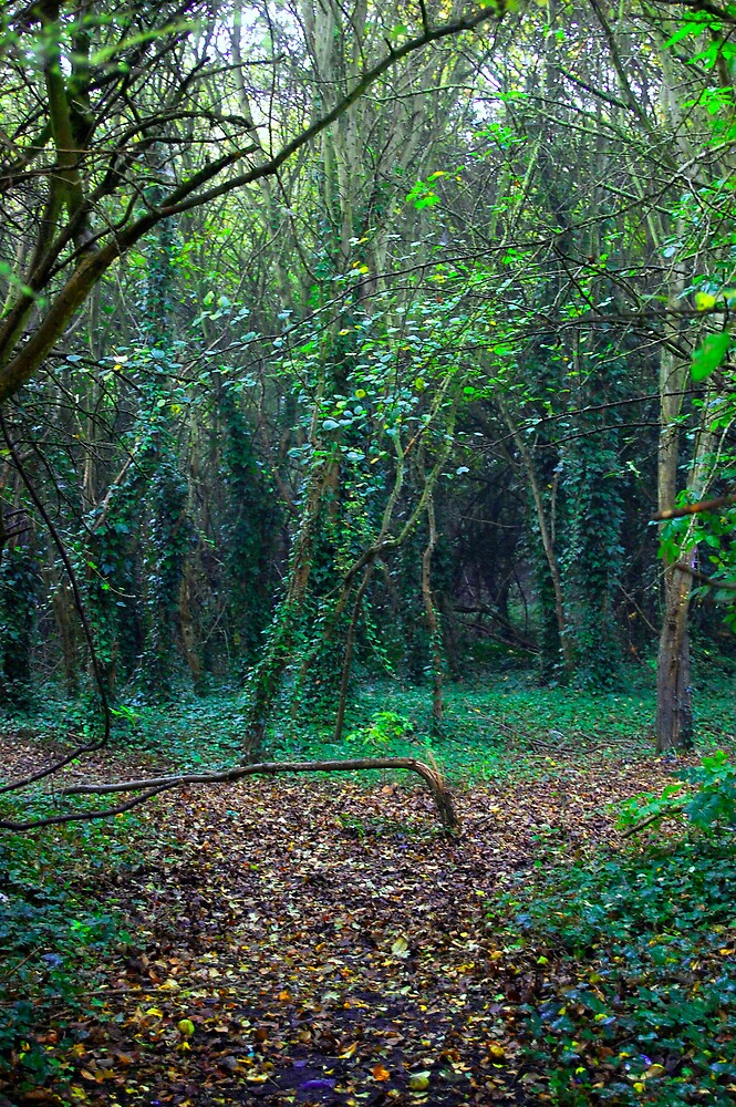 English Woodland by mikepom