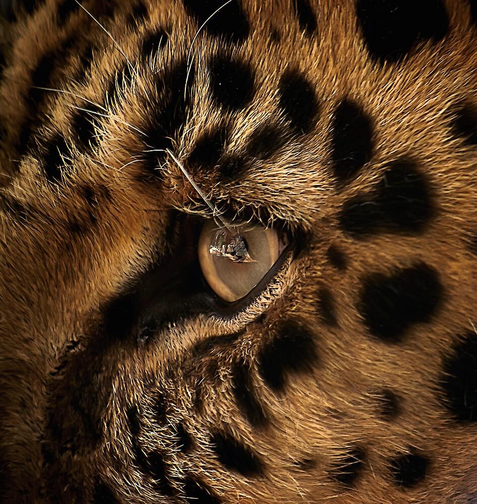 Golden Eye by Cheri  McEachin