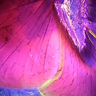 crystals under the microscope by Bernhard Adams