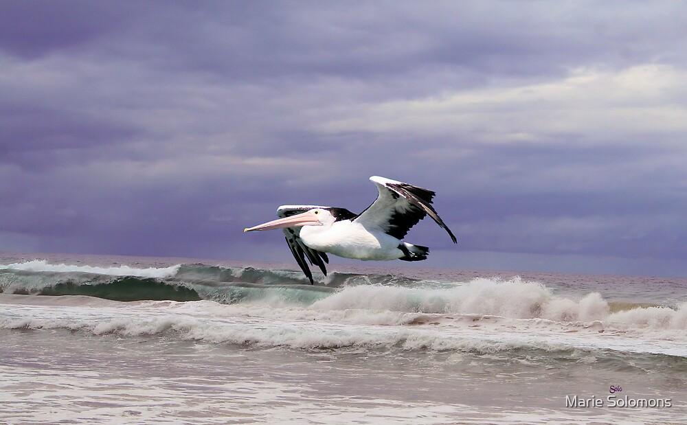 Pelican in Flight by Marie Solomons