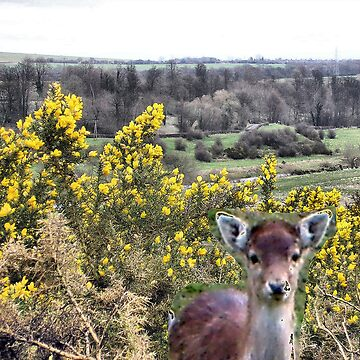 Little deer's head in gorse bush by hilarydougill