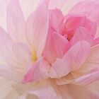Dreamy Pink by Alexandra Lavizzari