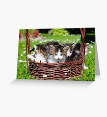 Furry young cats  Greeting Card