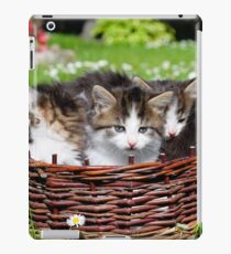 Furry young cats  iPad Case/Skin