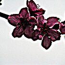 blossom by rebecca smith