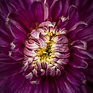 A killer dahlia (as in serial) by alan shapiro